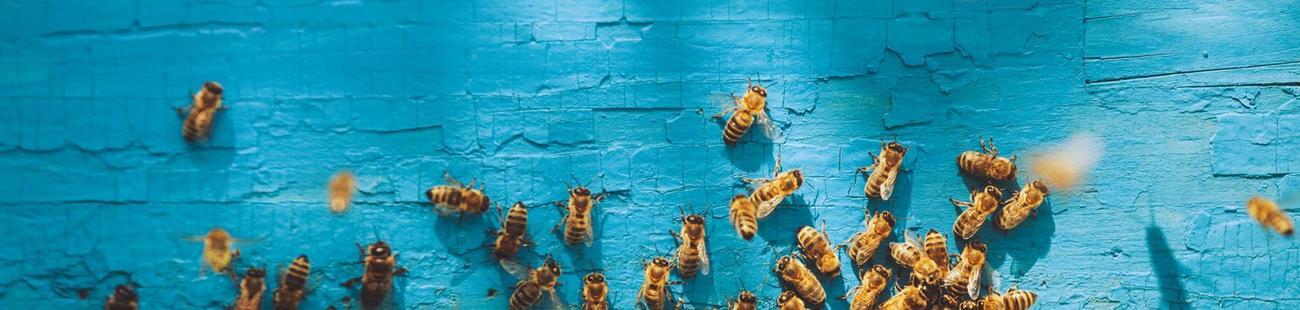 Beekeeper als Arbeitgeber auf talendo