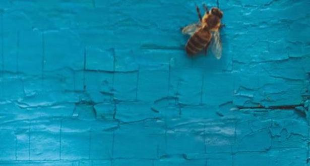 Arbeiten bei Beekeeper 825c4f