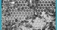 Arbeiten bei Beekeeper 231e43